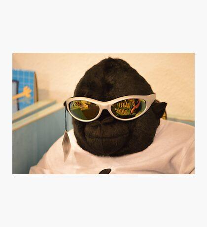 Cool shades Photographic Print