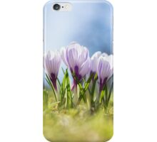 Crocus flowers in spring. iPhone Case/Skin