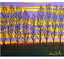 Poplar Sunset Photographic Print
