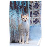 Cute stray cat. Poster
