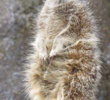 Meerkat Manners Sticker