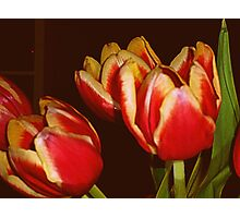 LOVELY RED AND YELLOW TULIPS Photographic Print