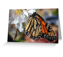 Butterfly in the Blossoms Greeting Card