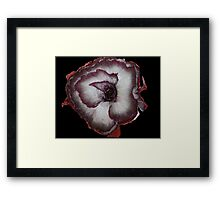Red Onion DPG160429a Framed Print