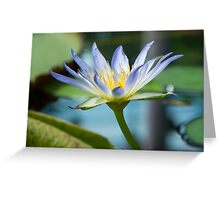 Nymphaea Caerulea - Blue Lotus of Egypt Greeting Card