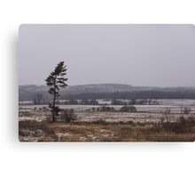 Canadian North - Lone Pine, Fields, Hills and Fresh Snow Canvas Print