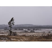 Canadian North - Lone Pine, Fields, Hills and Fresh Snow Photographic Print