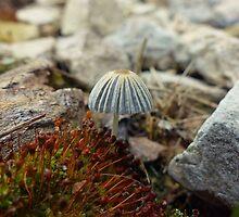Tiny Toadstool by Susan S. Kline