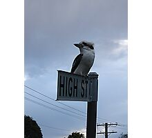 Kooka on High Photographic Print