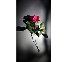 Rose on Metallic Gray - Vertical Photographic Print