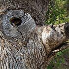 Smokey the Bear Tree by Randy Turnbow