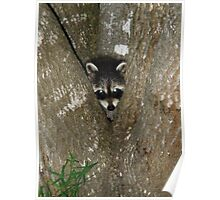 Baby Raccoon and Jesus  Poster