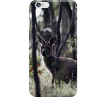 Kangaroo on Mt. Lofty, Adelaide  iPhone Case/Skin