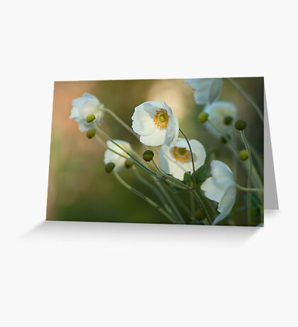 In the footsteps of angels - Windflower Greeting Card