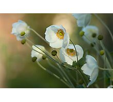 In the footsteps of angels - Windflower Photographic Print