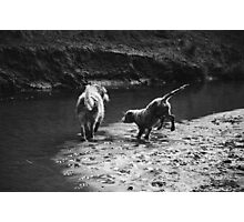 2 dogs playing Photographic Print