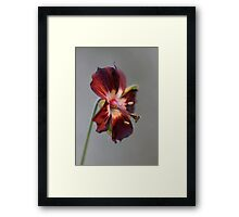 Mourning widow Framed Print