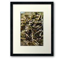 Sea Urchin Spines Framed Print