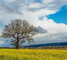 Spring in Shropshire by Nick Jenkins