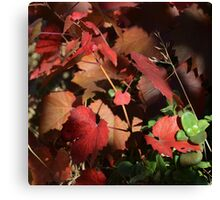 the requisite reds Canvas Print