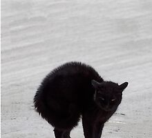 Black Cat by Jane McDougall