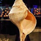 Seashell by SuddenJim