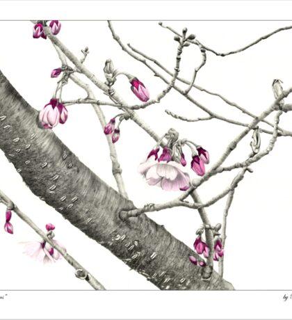 April Blossoms Sticker