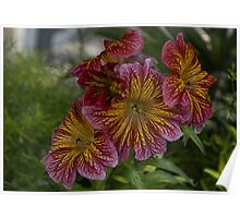 Exotic Spring Flowers  Poster