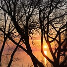 Sunrise Through the Chaos of Tree Branches by Georgia Mizuleva