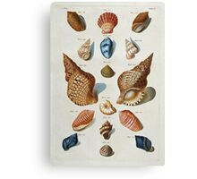 Vintage famous art - Franz Michael Regenfuss - A Selection Of Seashells Canvas Print