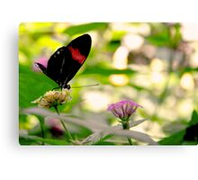 2016 Butterfly 1 Canvas Print