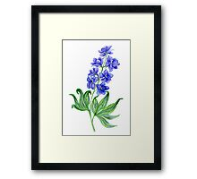 Delphinium watercolor Framed Print