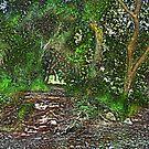 Walnut Creek Park by Chet  King