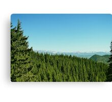 Spring mount 9 Canvas Print