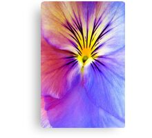 Purple and Yellow Pansy Canvas Print