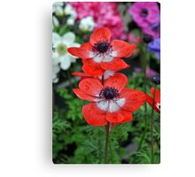 Two red poppy flowers Canvas Print