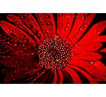 Red Raindrops Photographic Print