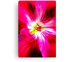 Pink, Red, and White Geranium Canvas Print