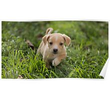 Cute Little Puppy Dog Photography Poster