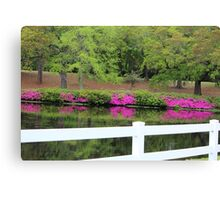 Beauty By The White Fence Canvas Print