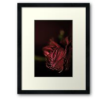 Dried Flowers Series -Red Rose- Framed Print