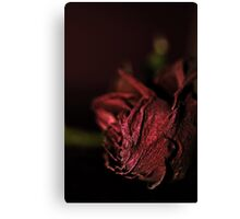 Dried Flowers Series -Red Rose- Canvas Print