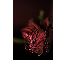 Dried Flowers Series -Red Rose- Photographic Print
