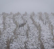 Snow Storm Sandhill Crane 2016-1 by Thomas Young