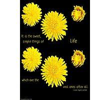 Dandelion Simplicity Photographic Print