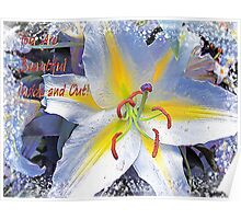 Day Lily Beauty Poster