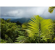 Tropical Rainforest - Jungle Green and Rain Clouds Photographic Print