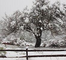 Springtime In the Rockies...Garden of the Gods...Colorado Springs by dfrahm