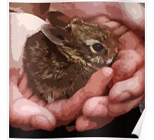 Cradle a Baby Bunny Poster
