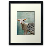 Cute As A Spring Lamb  Framed Print